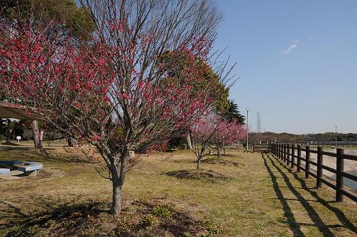DSC_9239-s.jpg